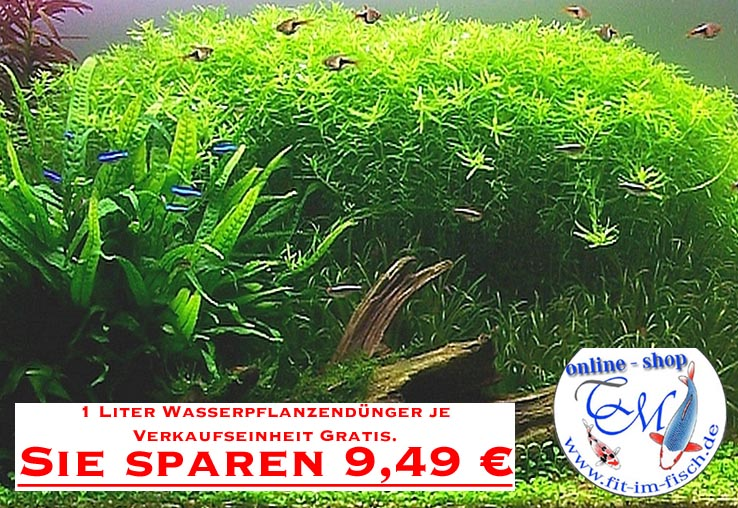 10topf aquarium pflanzen wasserpflanzen im mix aquarium ebay for Robuste zierfische
