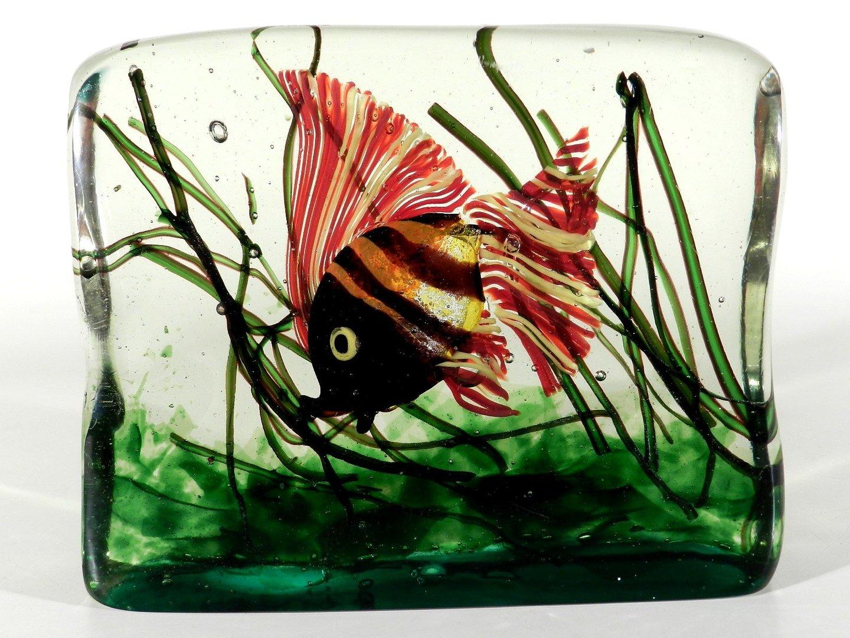 cenedes murano glas aquarium design wohl riccardo licata. Black Bedroom Furniture Sets. Home Design Ideas