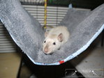 Hammock for rats Mice Wunsch Farbe