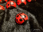 Hand painted ladybirds red ladybirds
