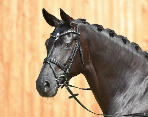 BUSSE Bridle Fashion