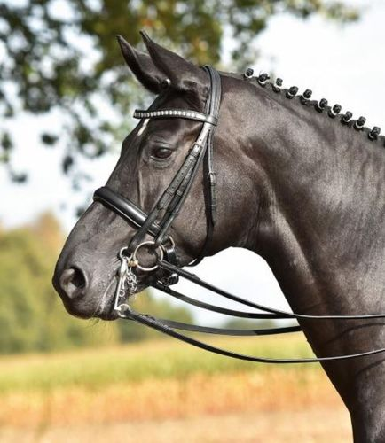 Double Bridle GRAND PRIX by BUSSE