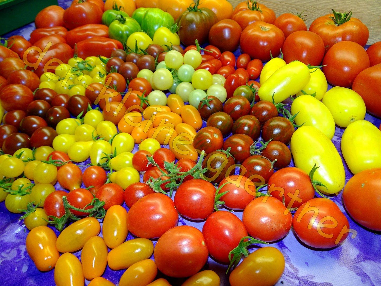 Tomaten Farben