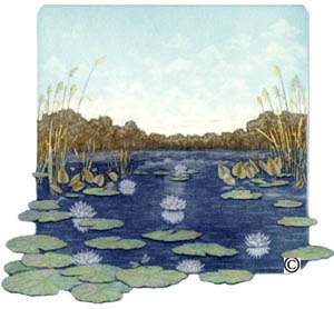 B6 - Water-Lily Pond