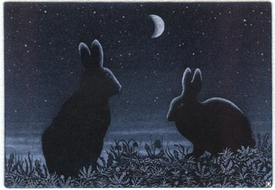 S5 - Rabbit in the Night