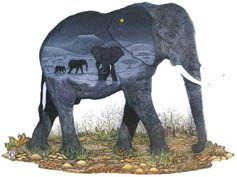 S14 - Elephants in Landscape