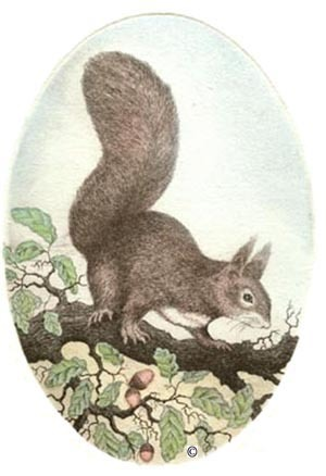 T23 - Squirrel