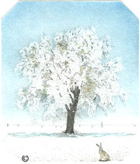 B30 - Tree in Winter