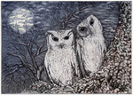 V31 - Couple of Owl
