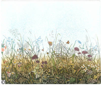 73. Meadow with Butterflys