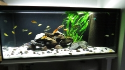 aquarium led beleuchtung. Black Bedroom Furniture Sets. Home Design Ideas