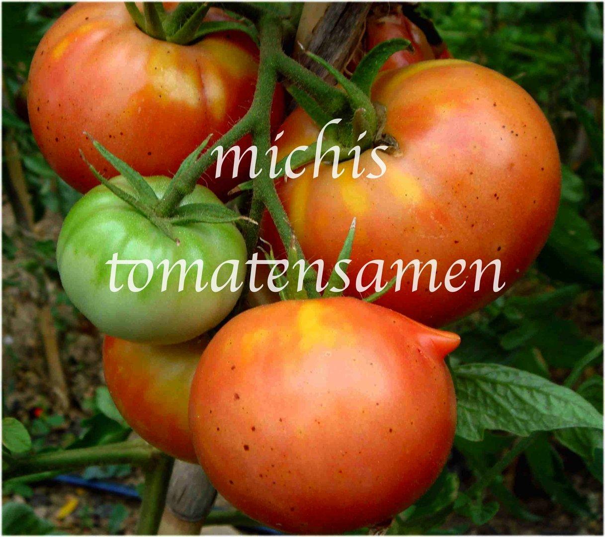 tomate bonny s best eine der besten tomaten der welt. Black Bedroom Furniture Sets. Home Design Ideas