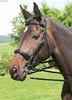 Weymouth bridle »Fortuna«