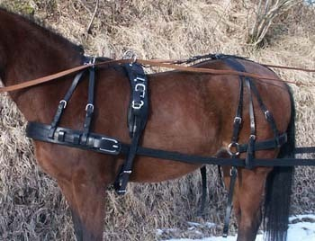 One horse marathons harness