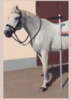 Aluminium horse measurement