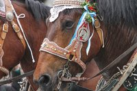 Harness bridle