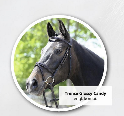 Equest Bridle Glossy Candy
