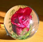 Paperweight Rose