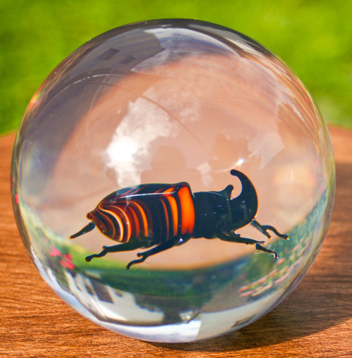 Paperweight European rhinoceros beetle